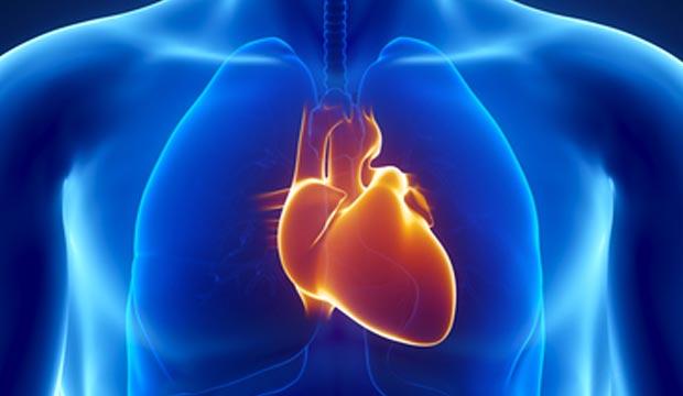 coeur-organe-humain