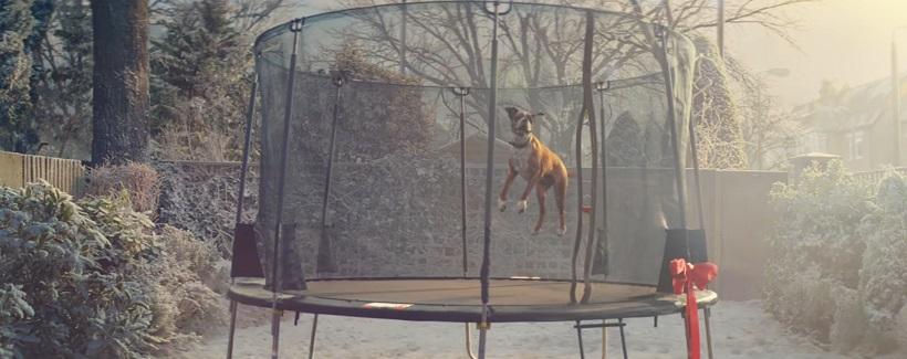 John Lewis chien