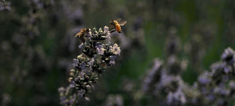 abeilles realite virtuelle