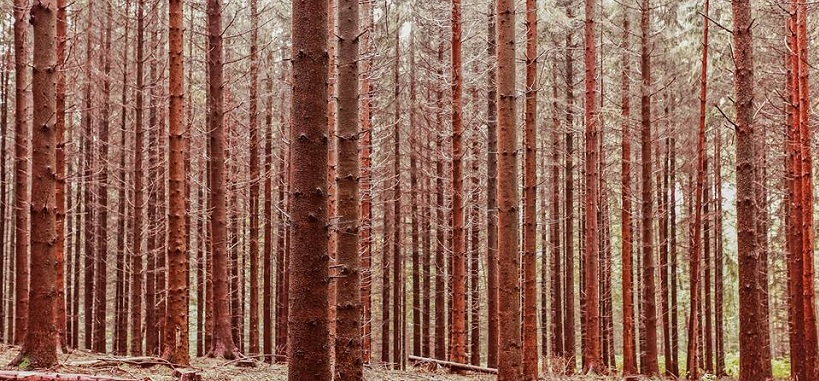 foret-pins