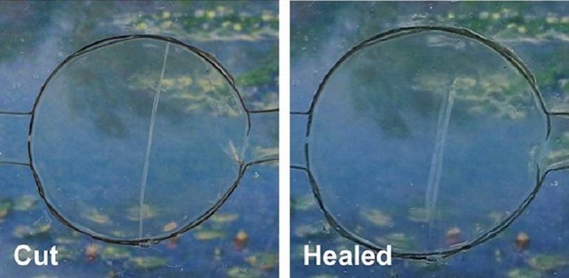 cut-healed
