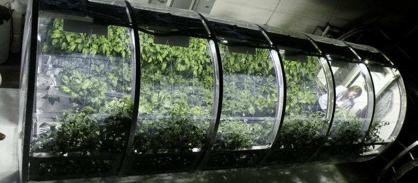 Faire pousser des légumes dans l'espace