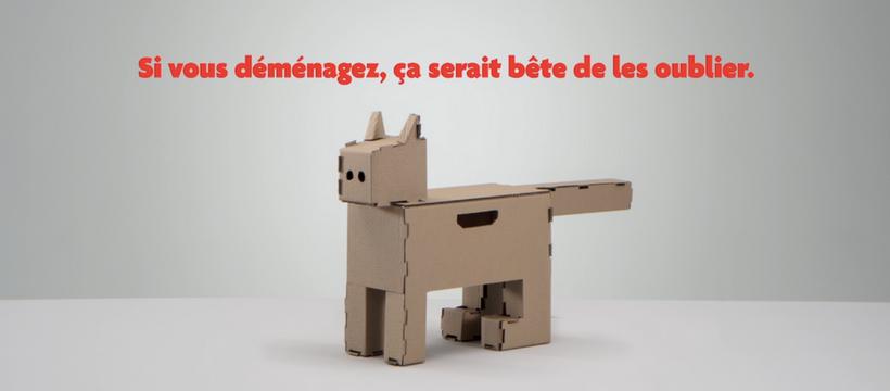chat en carton
