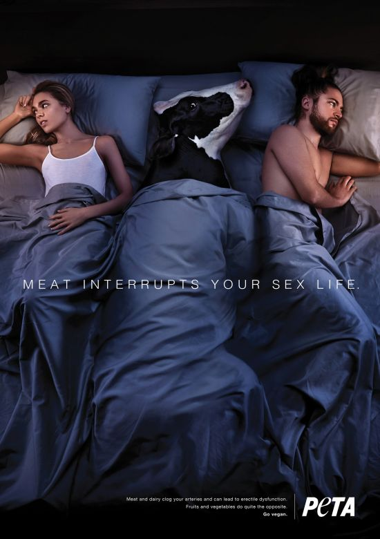 PETA viande erection vache