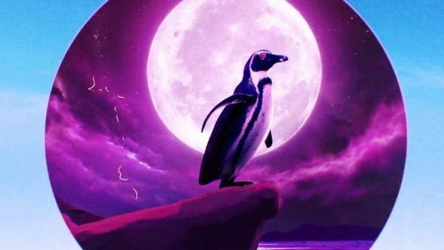 Pingouin Rock