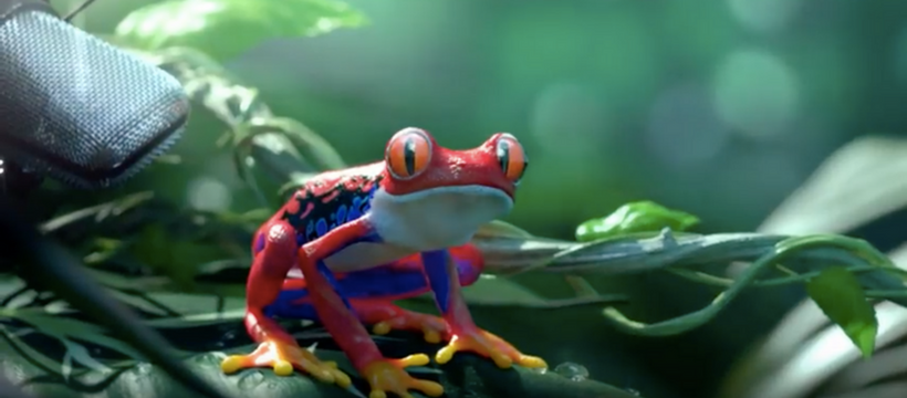 grenouille synthese jungle