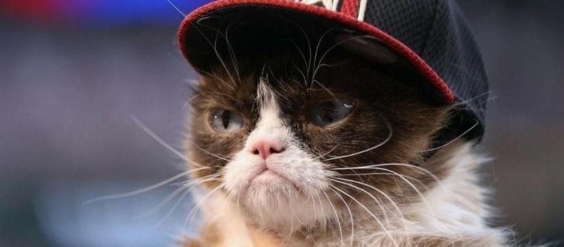 Grumpy Cat en casquette
