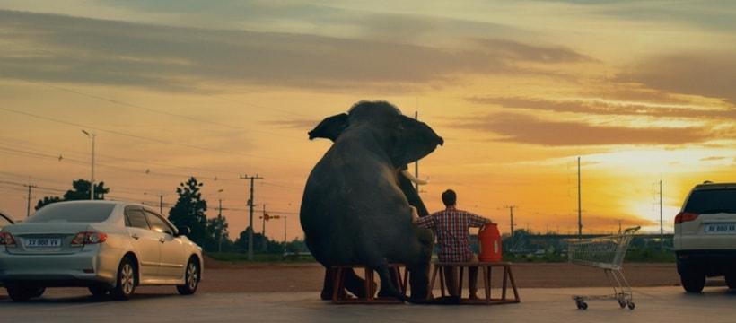 elephant assis devant un coucher de soleil