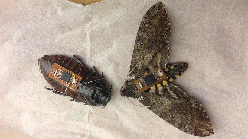 insectes robots