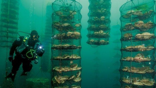 elevage poissons