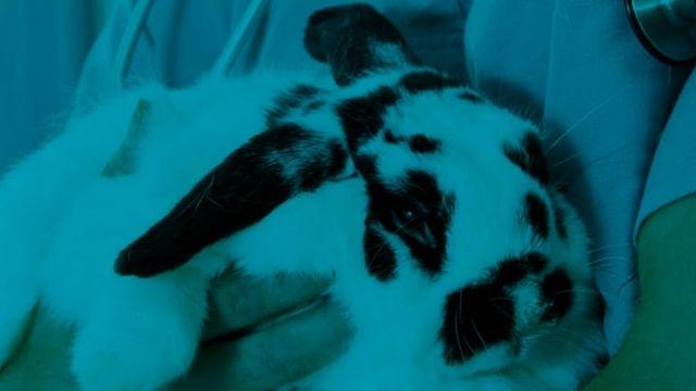 Un lapin dans les bras d'un médecin