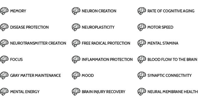 propriétés cerveau