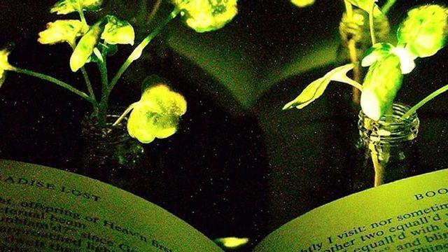 MIT plantes