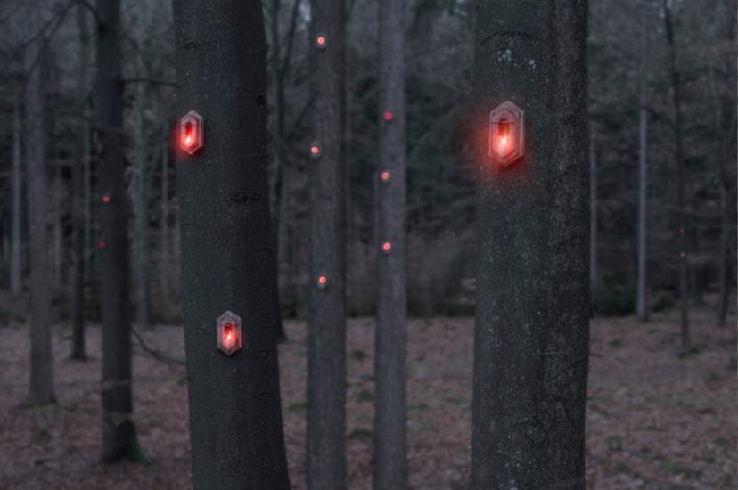 Lumières rouges dans la forêt