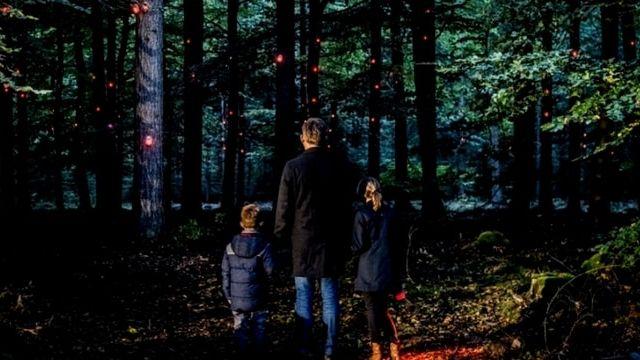 lumières dans une forêt