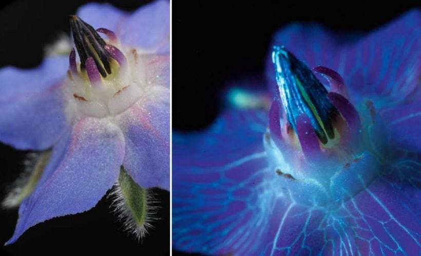 fleur bourrage à la lumière ultraviolet