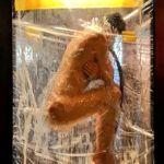 mannequin nu dans une vitrine
