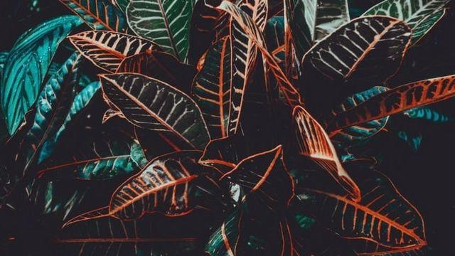 plante en gros plan