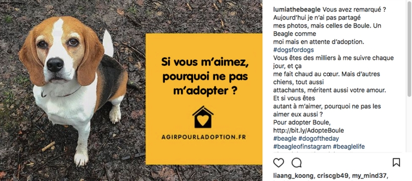 dogs for dogs sur instagram