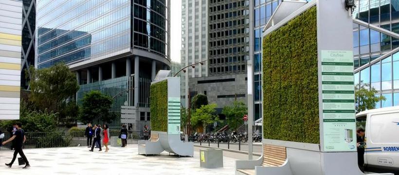 mur végétal dans la ville