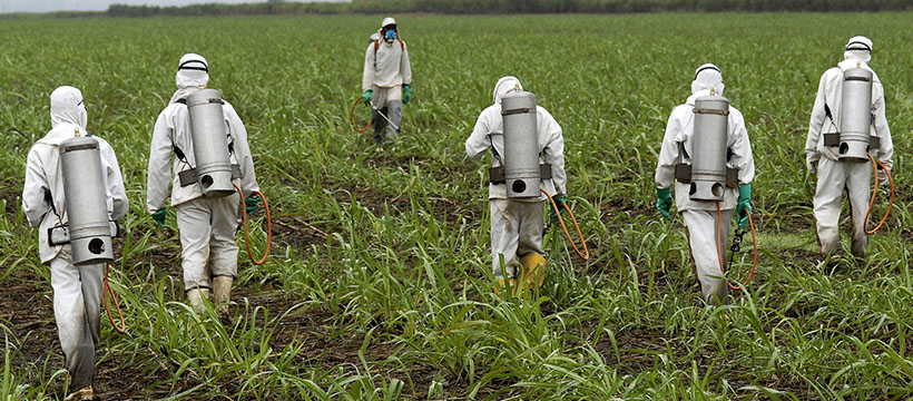 Des hommes pulvérisent du glyphosate dans les champs