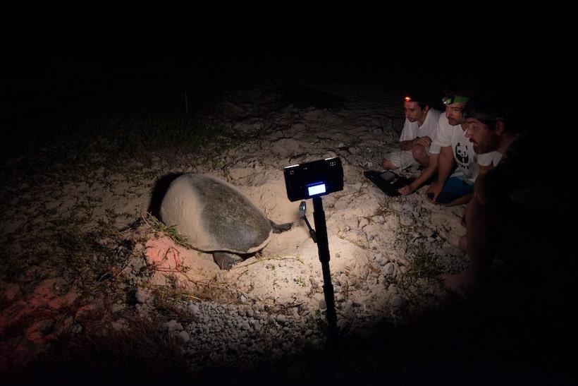 tortue sur une plage
