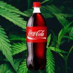 Des bouteilles de Coca-Cola devant des feuilles de cannabis