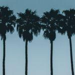Quatre palmiers sur un ciel bleu