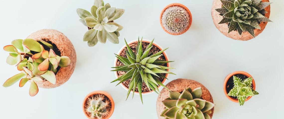 Des plantes en pot vues du dessus