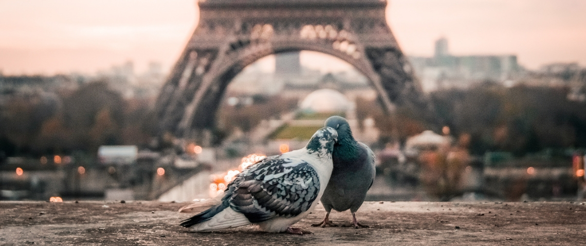 Deux pigeons devant la Tour Eiffel