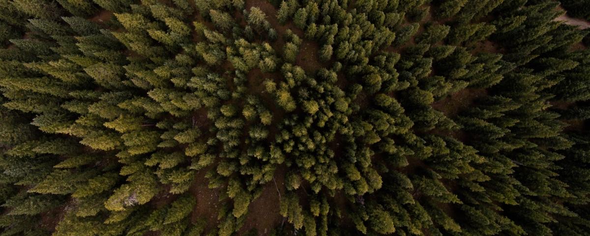 forêt vierge vue du ciel