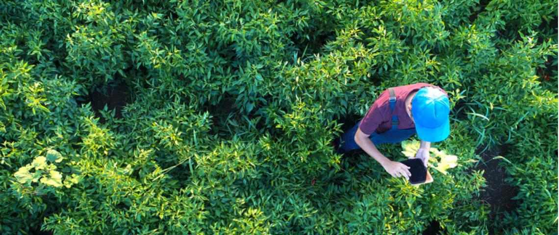homme tient une tablette dans un champ de verdure