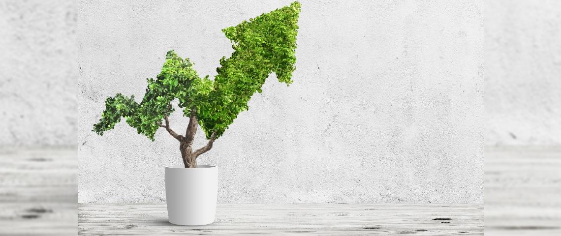 Un arbre dont les feuilles forment une flèche ascendante dans un petit pot