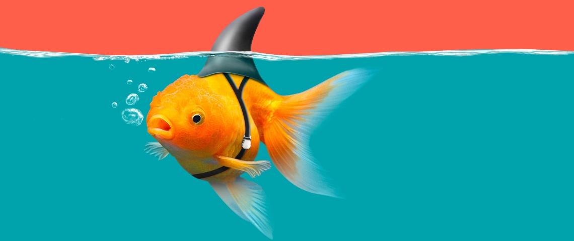 un poisson rouge déguisé en requin