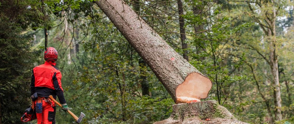 Un homme en uniforme rouge coupe un arbre à la hache