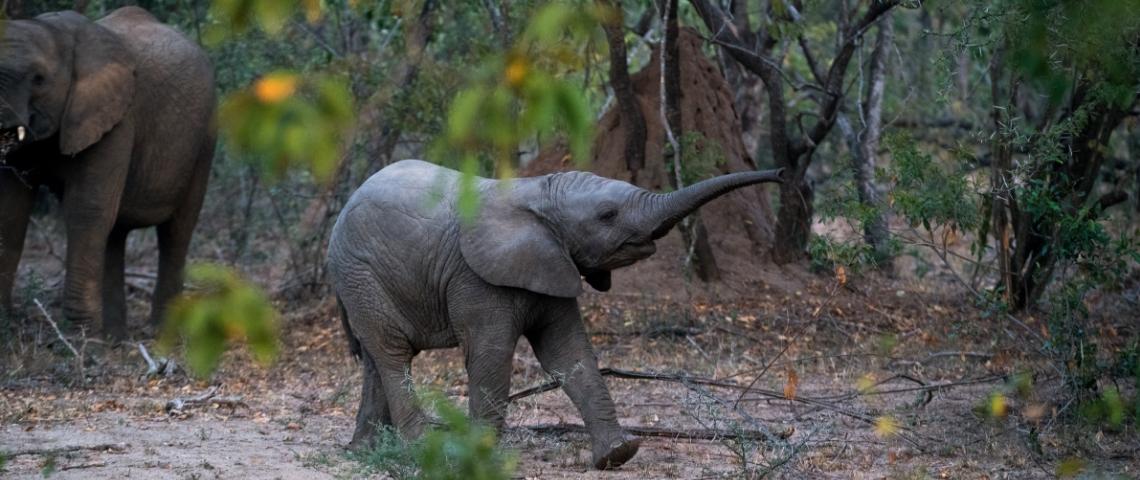 Un éléphant dans la forêt
