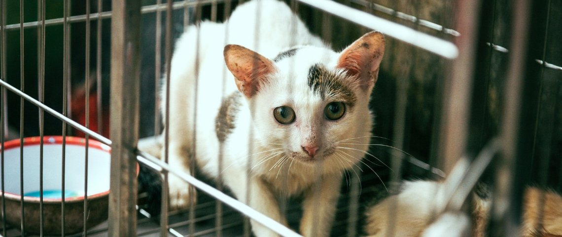 Un chat dans une cage