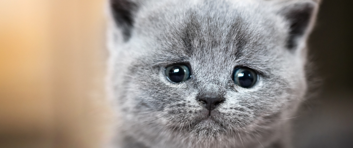 un chat triste