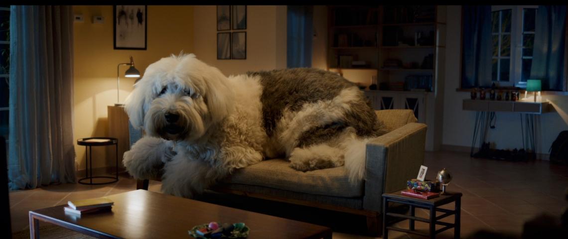 Un très gros chien dans un salon