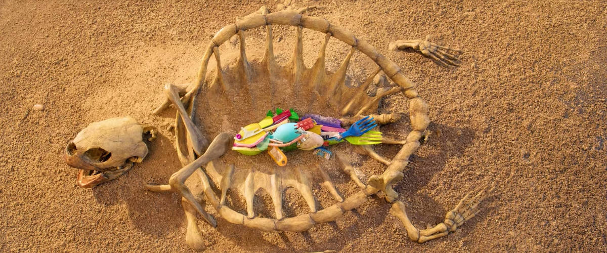 Poisson composé de plastique dans la carcasse d'une tortue