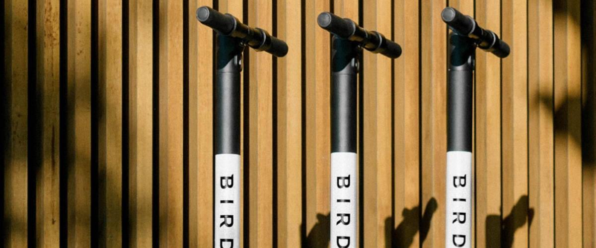 Trois trotinettes Bird sur un fond en bois