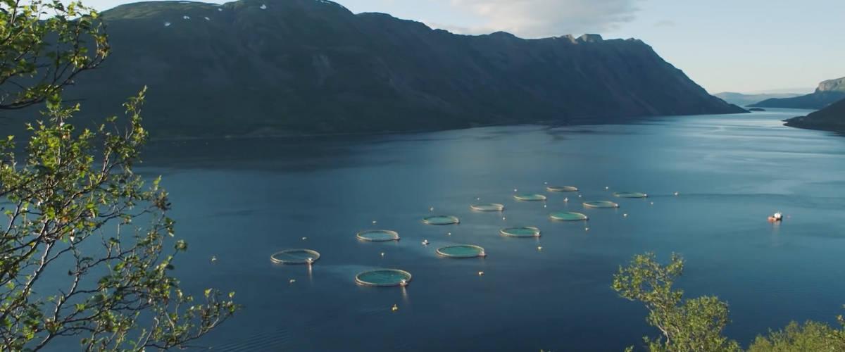 Un élevage de saumon en mer