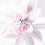Une bague dans une fleur