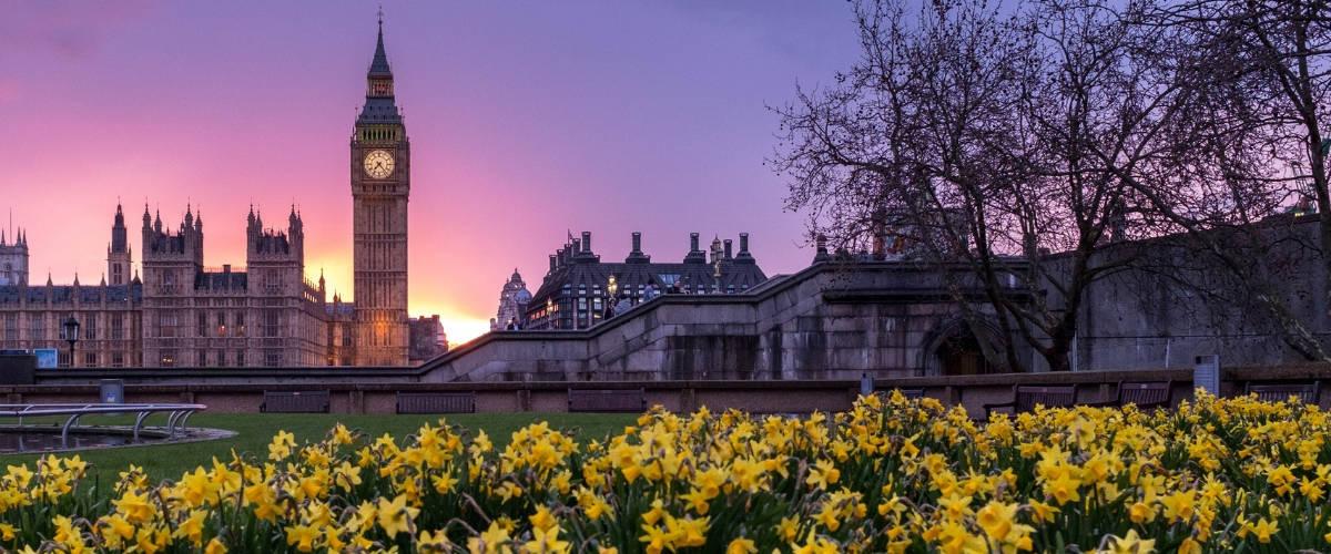 Parc de tulipes à Londres. La tour BigBen en arrière-plan