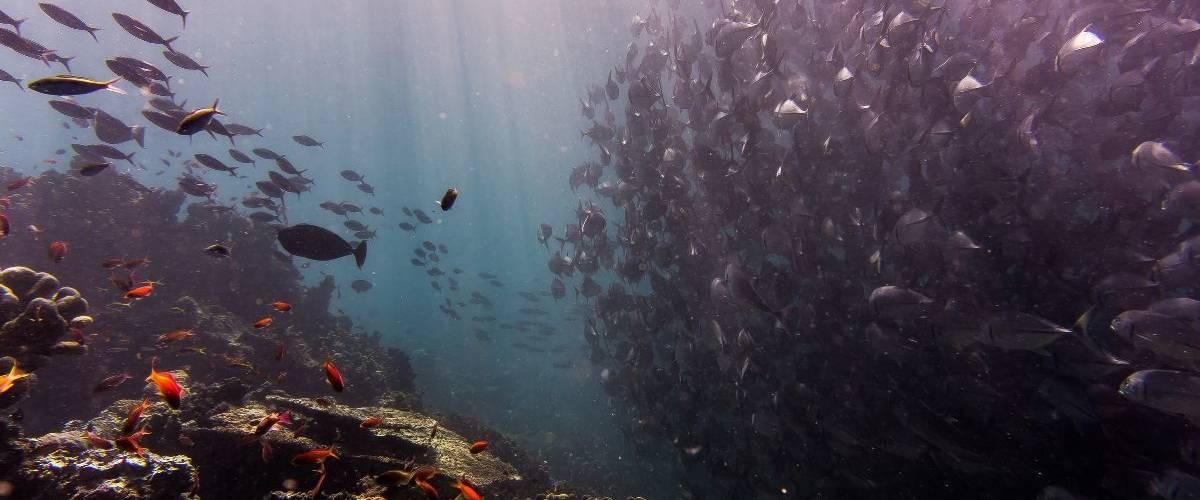 Photographie prise dans la mer avec de nombreux poissons
