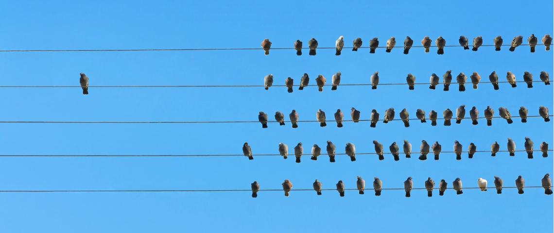 Des oiseaux posés sur une ligne électrique.