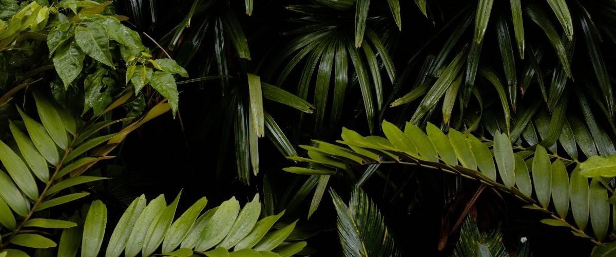 Gros plans sur des feuilles de plante grasses