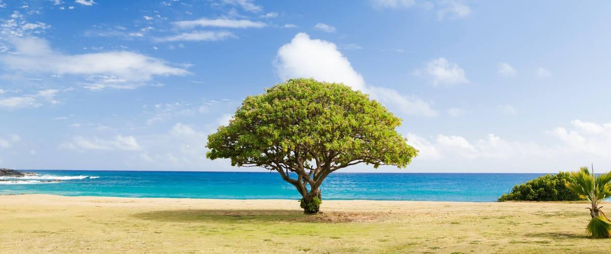 Un arbre sur une plage