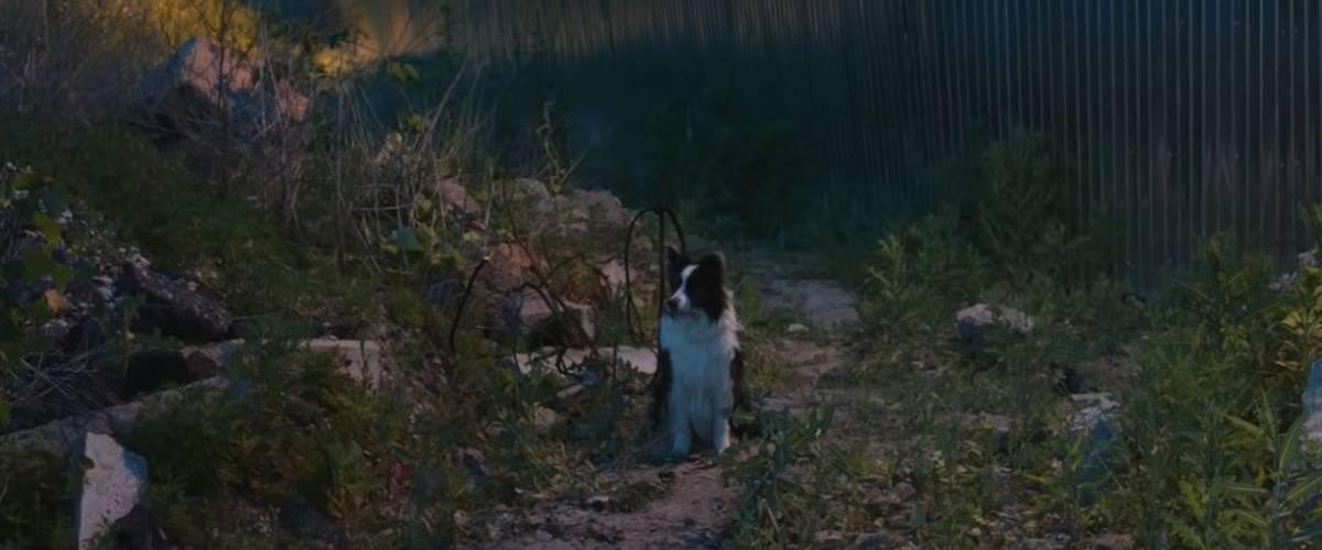 Un chien abandonné sur un terrain vague