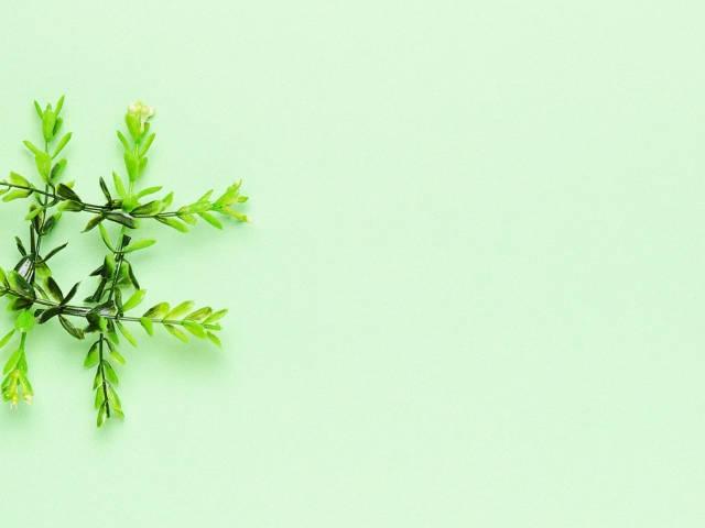 Un hashtag formé avec des feuilles